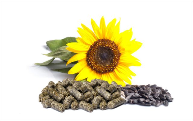sunflower_meal640х400