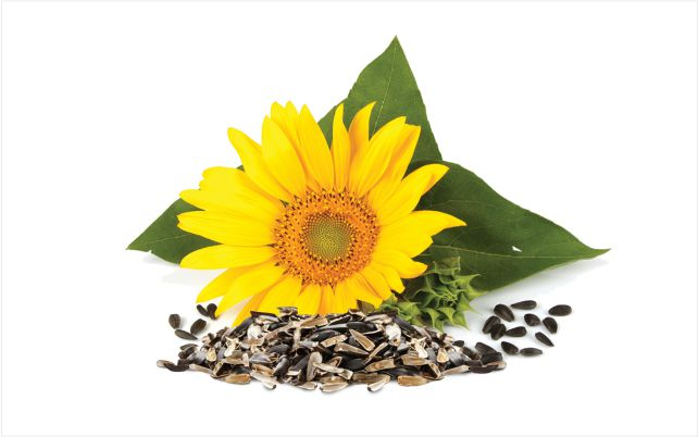 sunflower_shucks_640x400