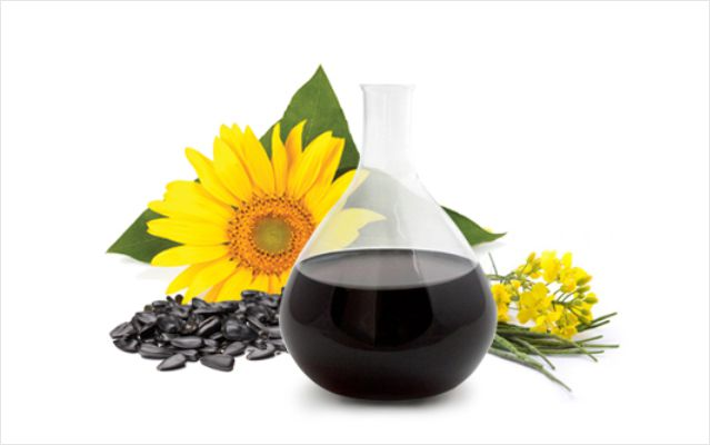 sunflower_rapeseeds_concentrate640x400